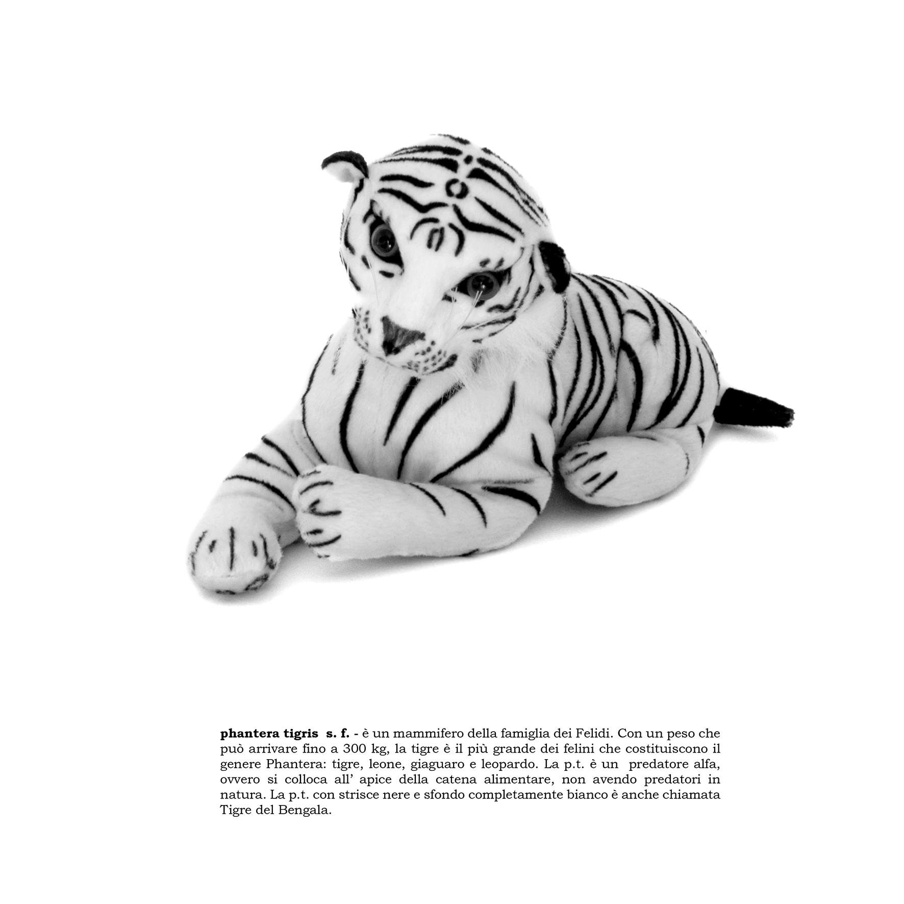 phantera tigris